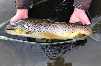 Fish in Grayson County